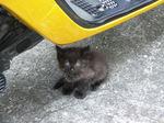 20090808_kitty1.jpg