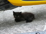 20090808_kitty2.jpg